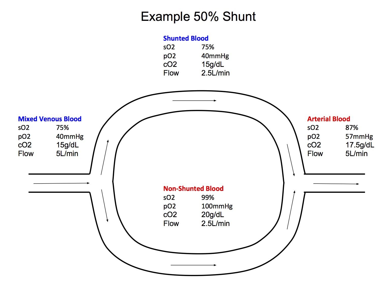 Respiratory Description Schematic Block Diagram Examplejpg Shunt Example Definition